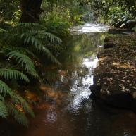 A river near Durban